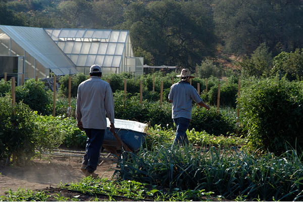 organic farm_12