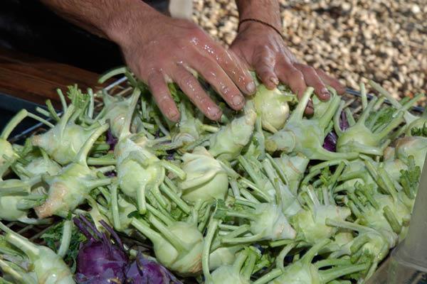 organic farm_2