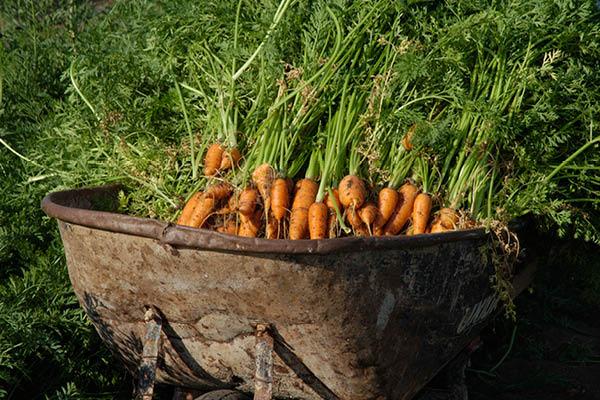 organic farm_4